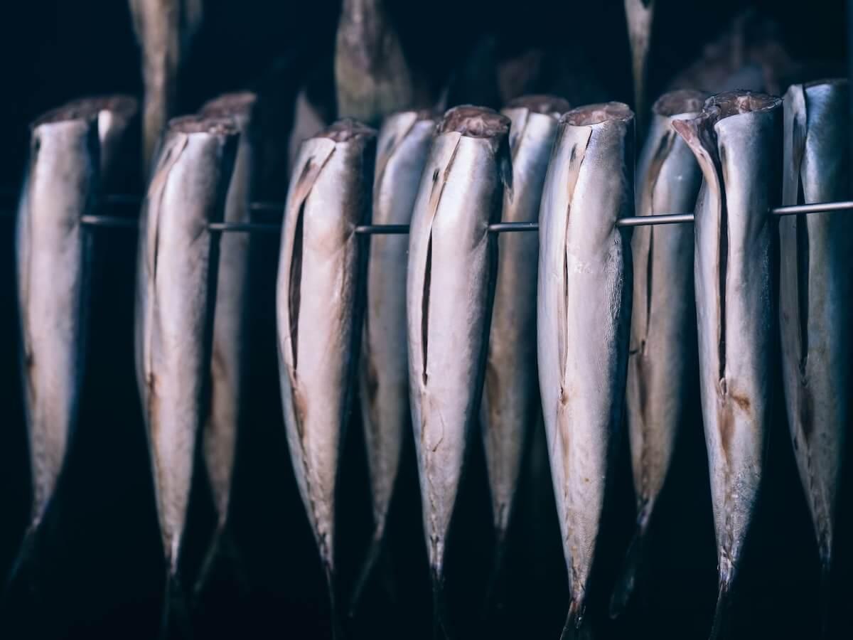 good fish guys nachhaltiger fisch beratung